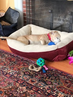 -Delia is in Maine and is pending adoption