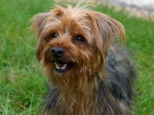 Scruffy - Special Dog