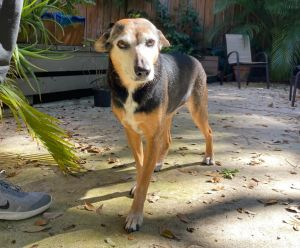 Jumpette is a very shy girl and she is in need of someone who is willing to put