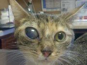 Alexa (hoarding cat) 2