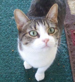 Belissa - Sweetest Kitty Ever!
