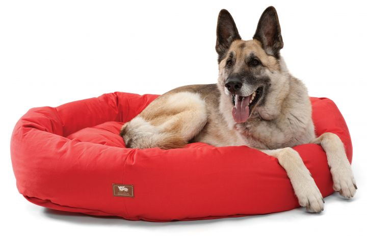 Dog For Adoption Donations Beds Toys A German Shepherd Dog In
