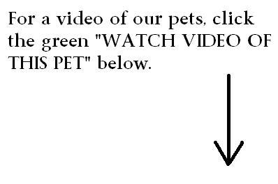 Daily Video of Adoption Animals at PCAS