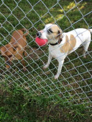 I am here with my sister Princess Diana We share a kennel here at HOPE We are both bird dogs
