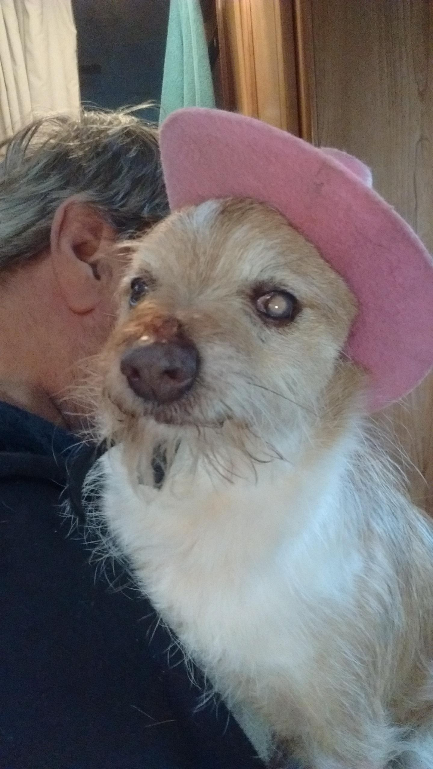 Dog for Adoption – Taco, near Winlock, WA   Petfinder