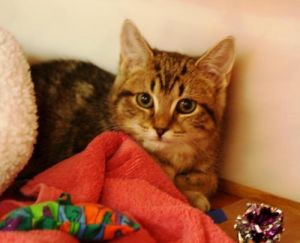 Ever want to adopt a cat who would look like a kitten forever Joyful is a tiny cat with a