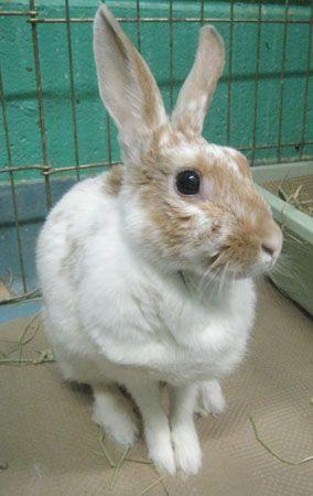 Tilly Bunny