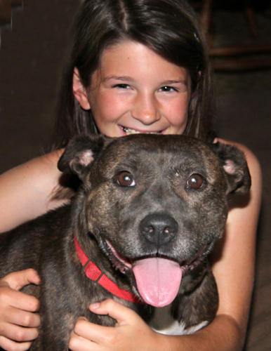 Willa, an adopted American Staffordshire Terrier Mix in Nashville, TN