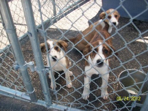 Puppies-6 available-RESCUE