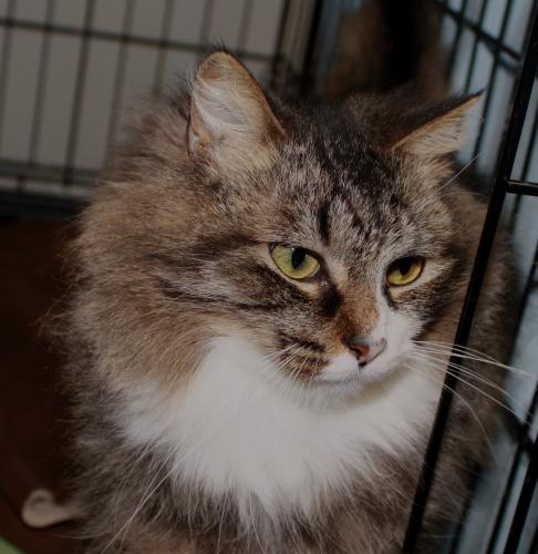 Adopted! Patsy