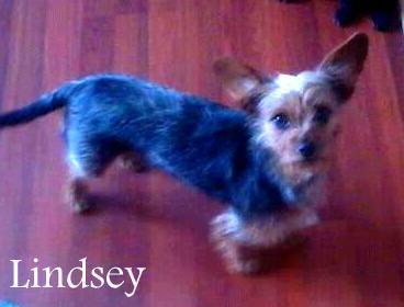 NJ - Lindsey