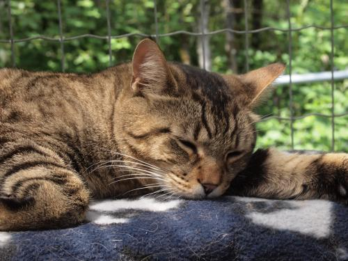 Bit Bit, an adopted Domestic Short Hair & Tabby Mix in Maple Ridge, BC
