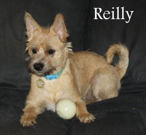 NJ - REILLY 1