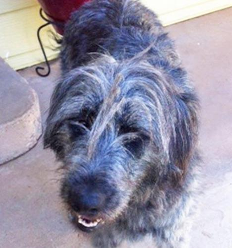 NM-Marlo ADOPTED! 3
