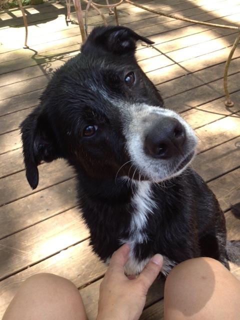 Shay - Adoption Pending 1