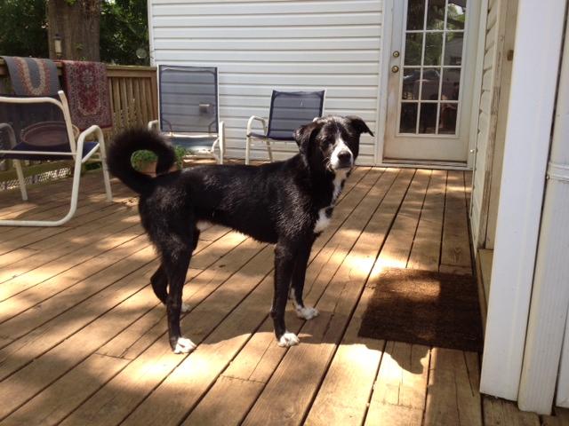 Shay - Adoption Pending 3