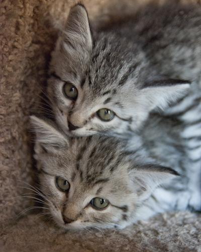 4 Kittens 2