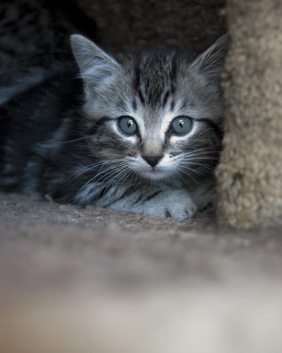 4 Kittens 1