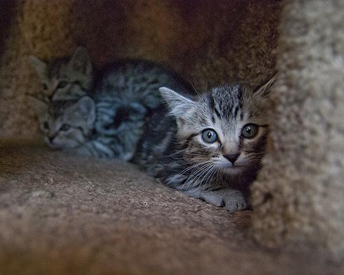 4 Kittens 3