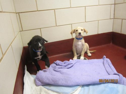 Timothy & Gunner, an adopted Labrador Retriever Mix in Marietta, GA