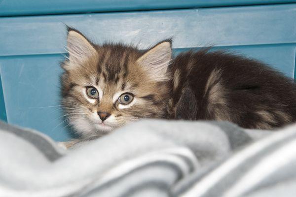 Cassette Kittens 2