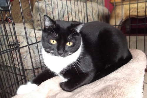 Lilybelle -Adopted!