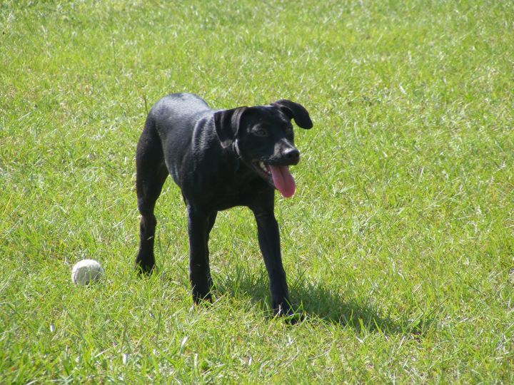 khloe, an adopted Labrador Retriever Mix in Valdosta, GA_image-1