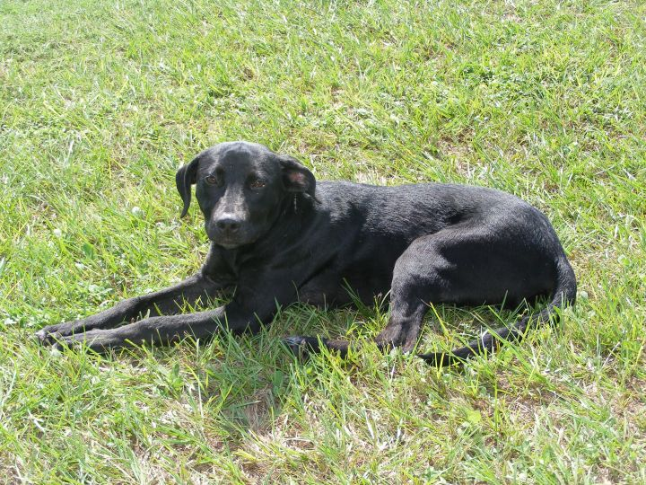 khloe, an adopted Labrador Retriever Mix in Valdosta, GA_image-2