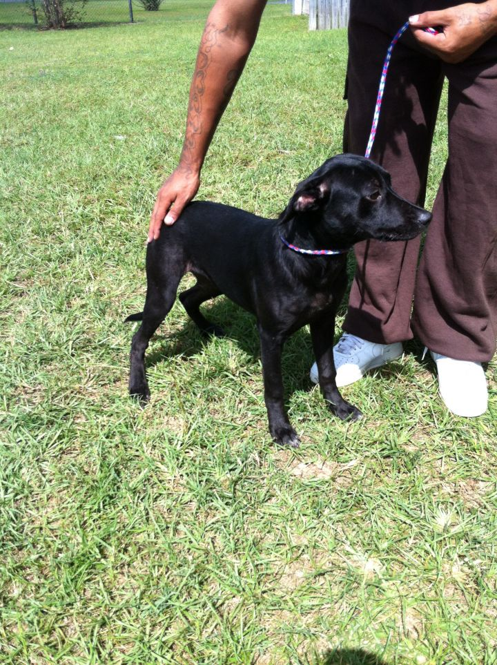 khloe, an adopted Labrador Retriever Mix in Valdosta, GA_image-3