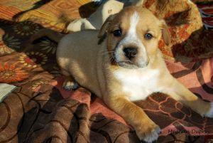 Chaka (Anna's Pup)