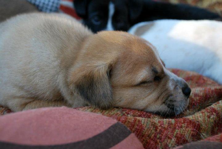Chaka (Anna's Pup) 2