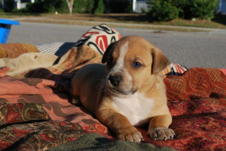 Chaka (Anna's Pup) 3