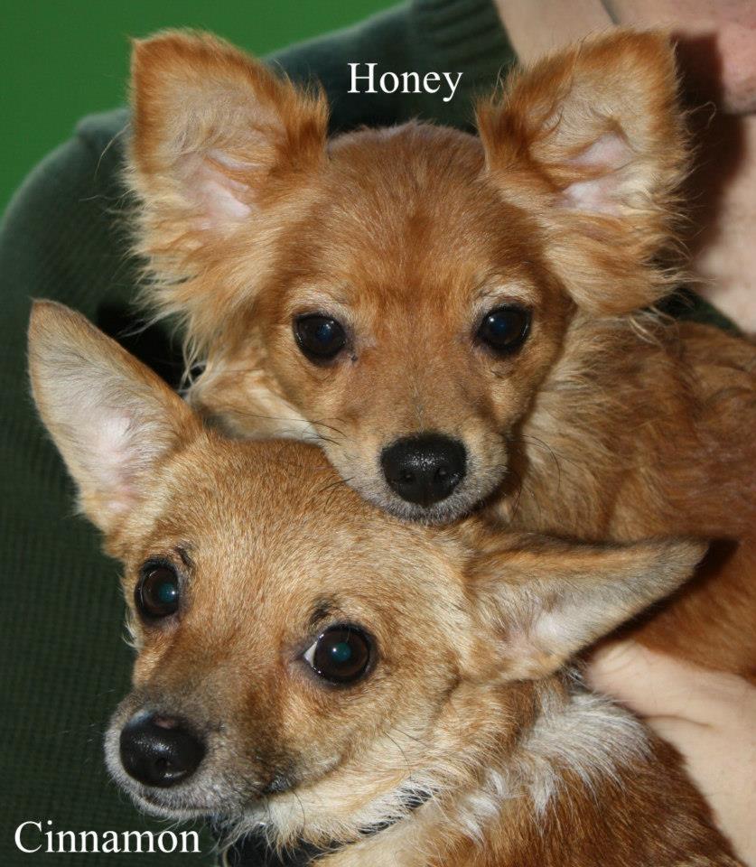 Nj Honey Cinnamon detail page