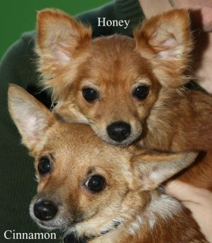 NJ - Honey & Cinnamon