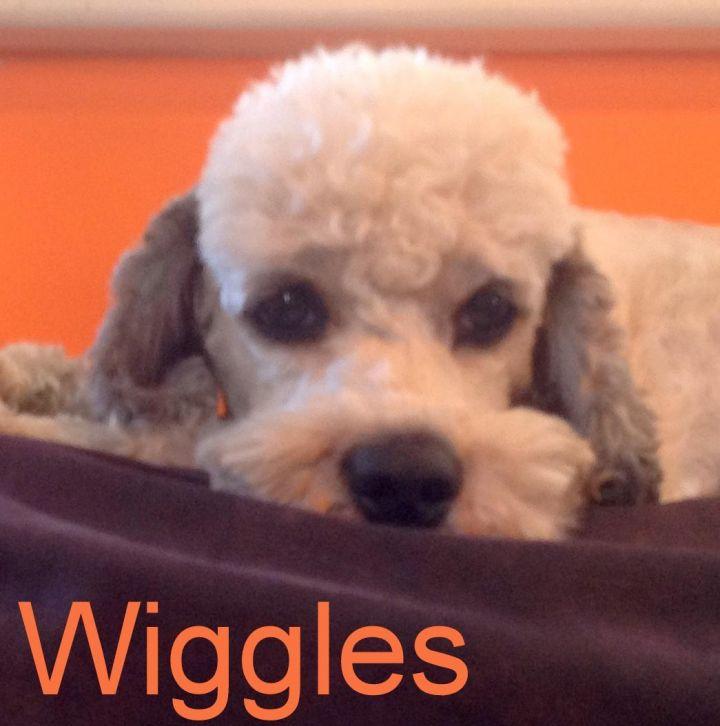 NJ - Wiggles 1