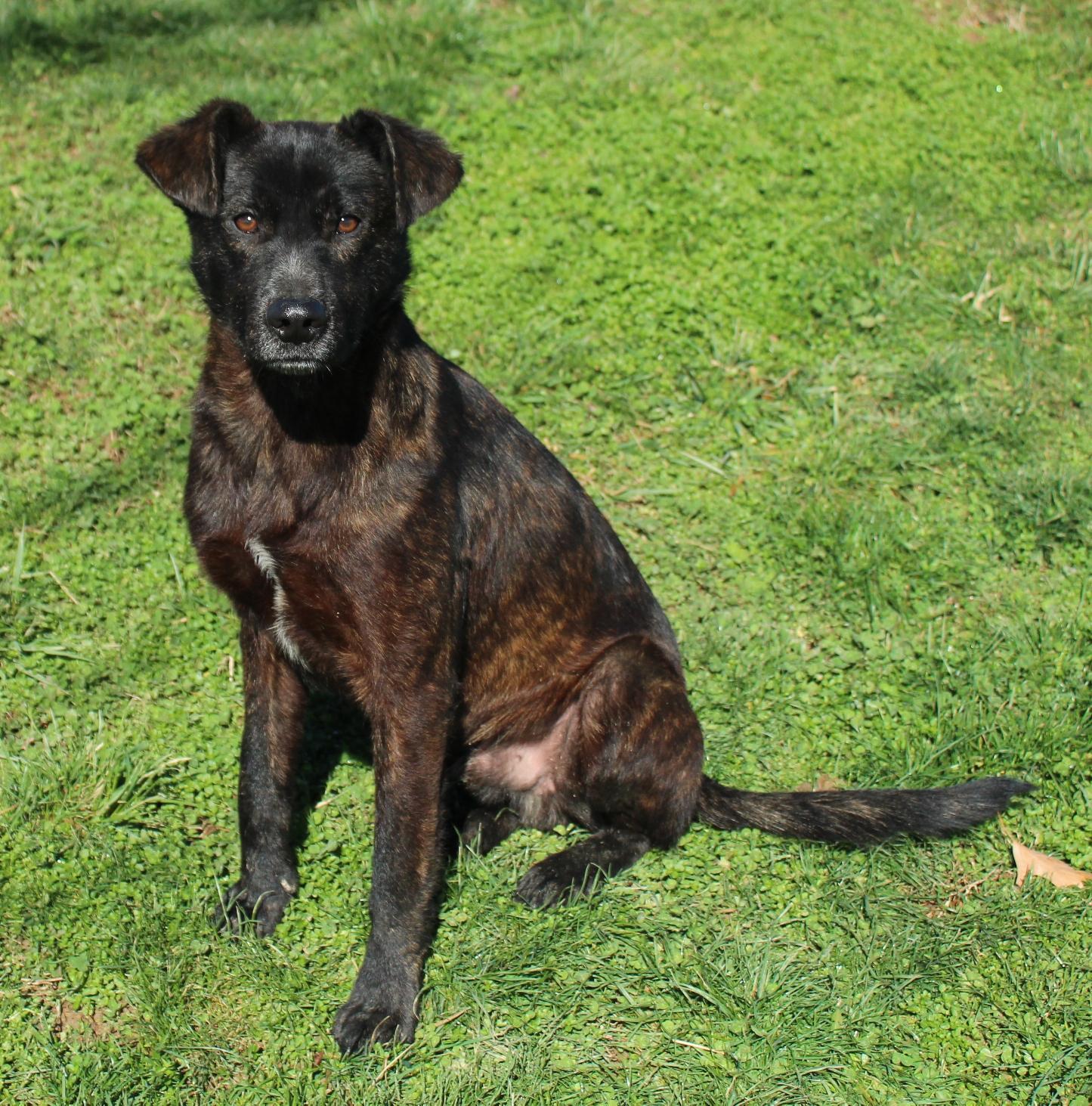 Bruce 2* (1 yr 40 lb) adoption pending 3/9 trans