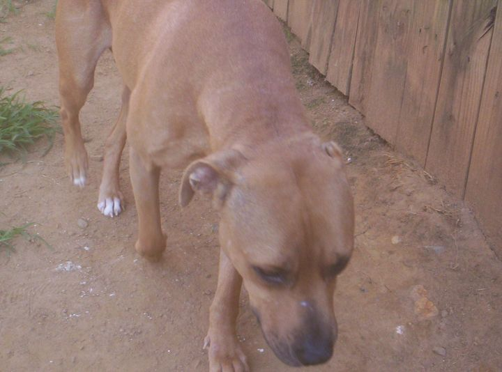 Gwen, some male dogs ok. NO cats (senior) 3