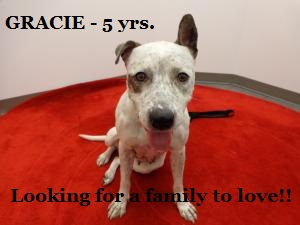 GRACIE - Sweet dog! Watch my video 3