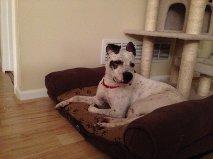 GRACIE - Sweet dog! Watch my video 2