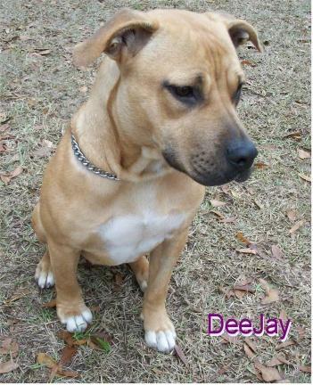 DeeJay 1