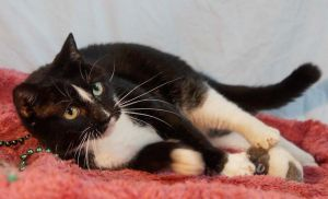 Much of Tux s early life is a mystery He was adopted through SpayMartas a small kitten and the