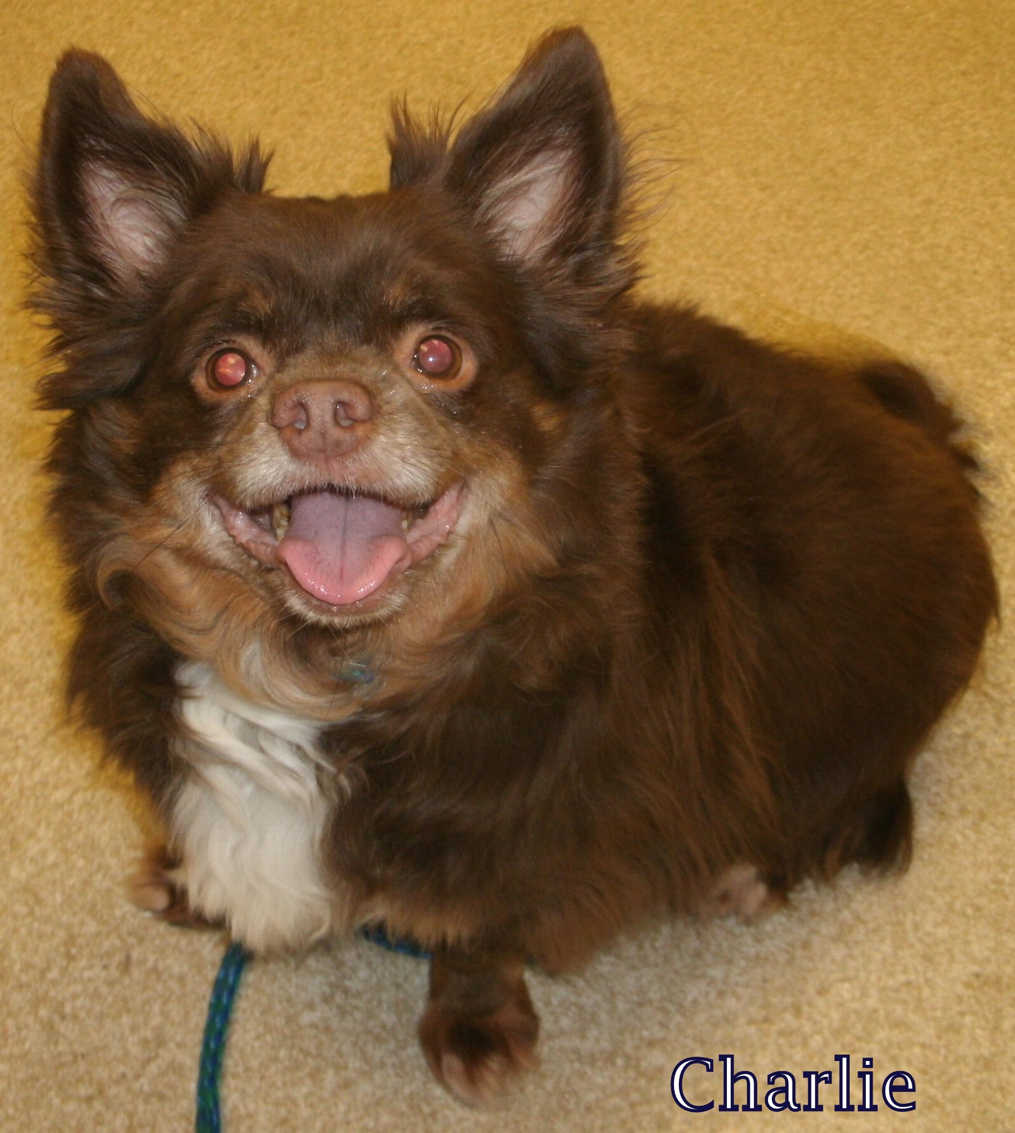 Charlie-has been ADOPTED!!!