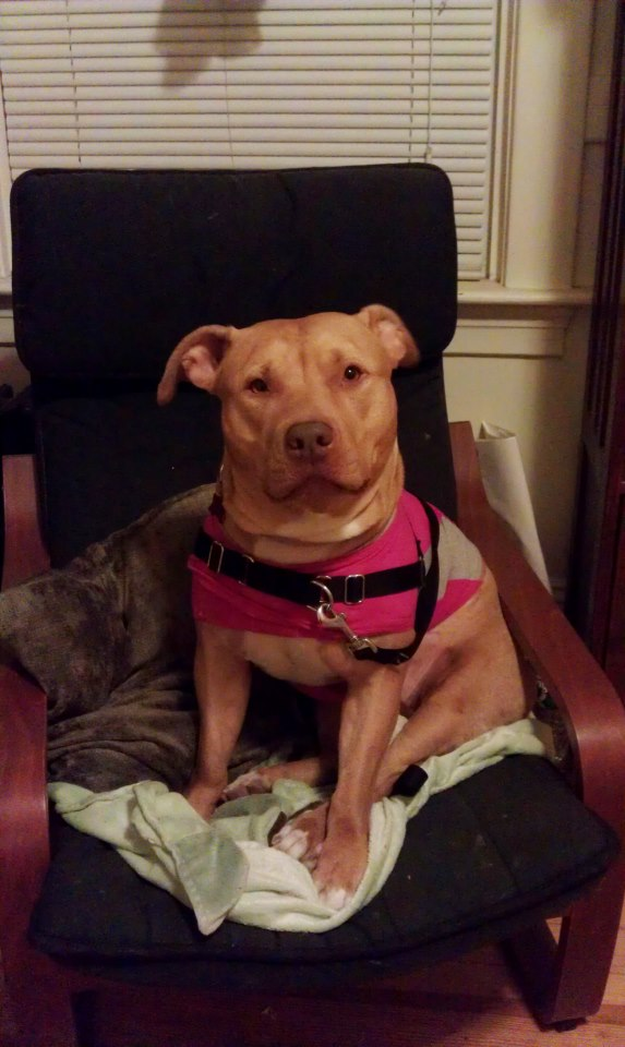 Theresa - Snuggly, Calm, Loves Kids & Dogs! 2