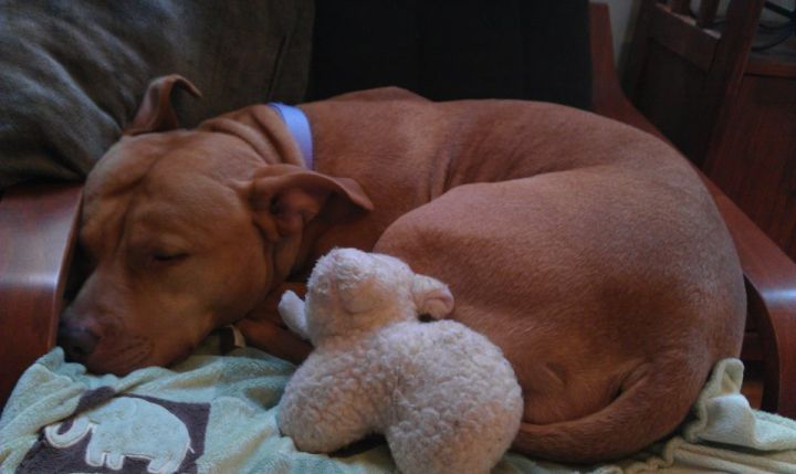 Theresa - Snuggly, Calm, Loves Kids & Dogs! 3