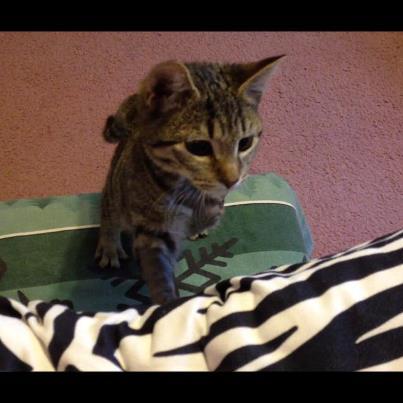 Poppy-very special kitten 2