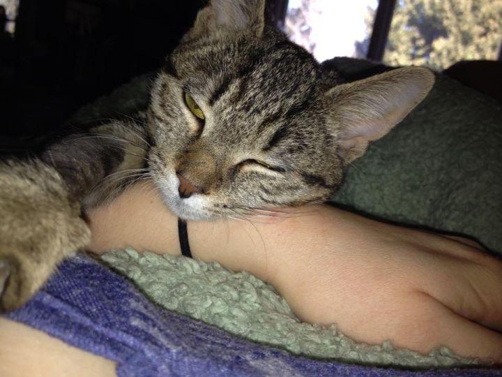 Poppy-very special kitten 1