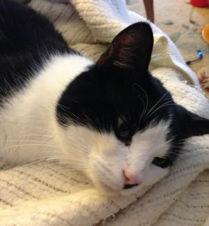 Pedro is very friendly to humans but is best as your only cat or with maybe one