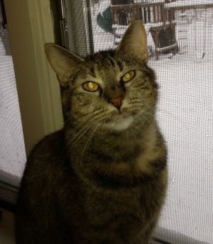 Scarlett was born around 4311 She is very sweet but shy She is fostered in S