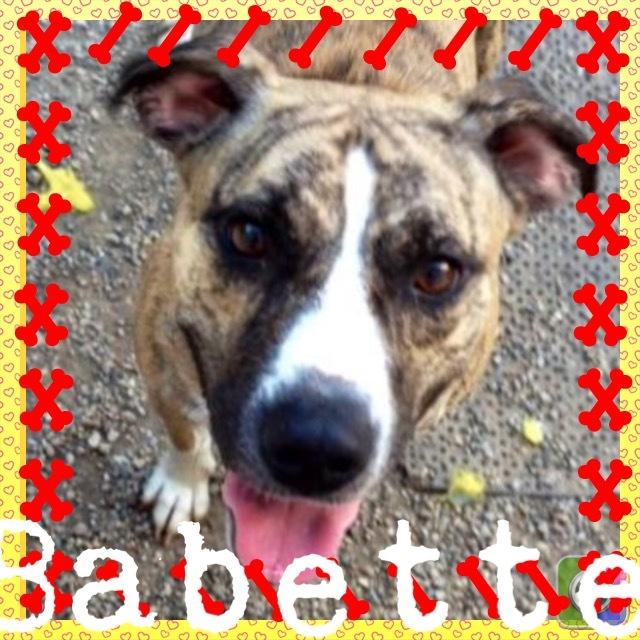 Babett 3