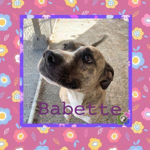 Babett
